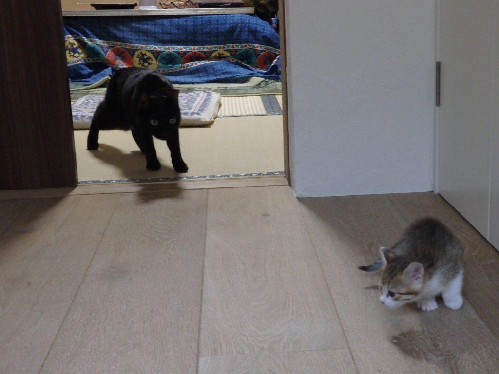 猫 ネグロ テトコ
