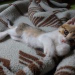 猫 テトコ