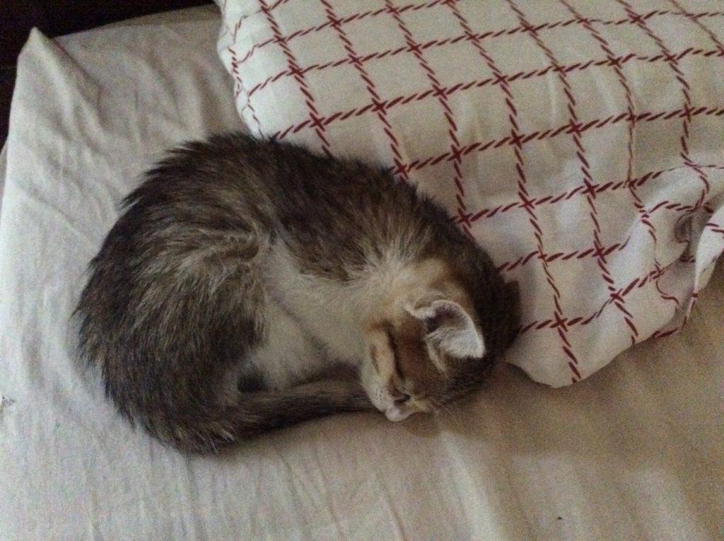テトコ 猫