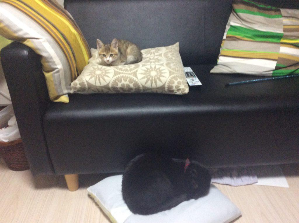 テトコ ネグロ猫