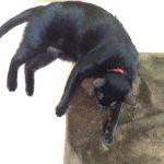 ネグロ黒猫