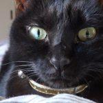日田 黒猫 ネグロ 猫