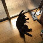 黒猫ネグロ