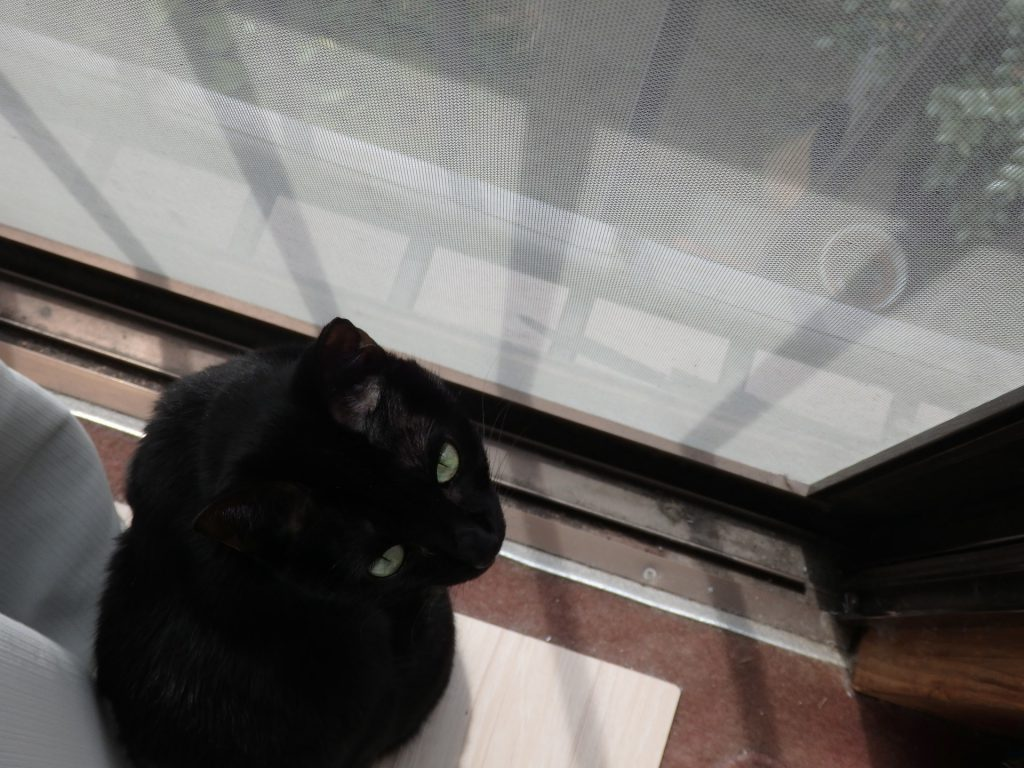 黒猫 ネグロ