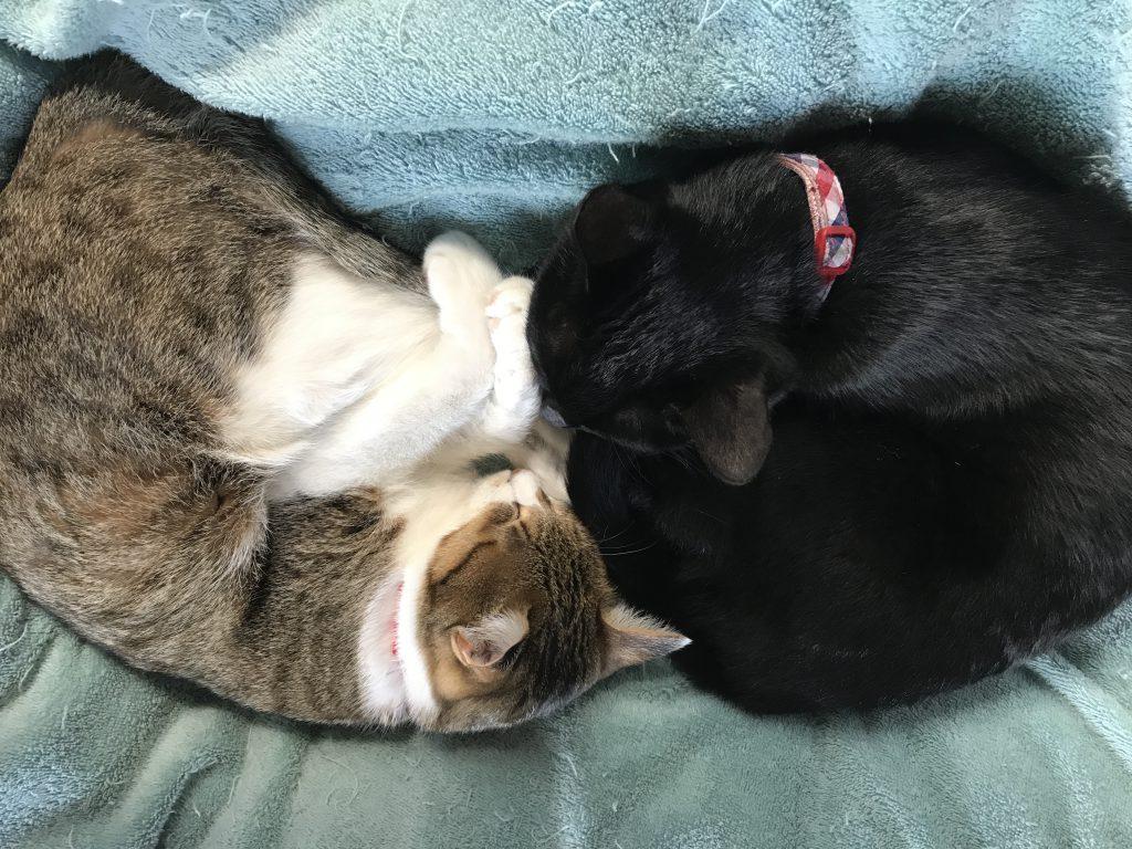 多頭飼い 猫