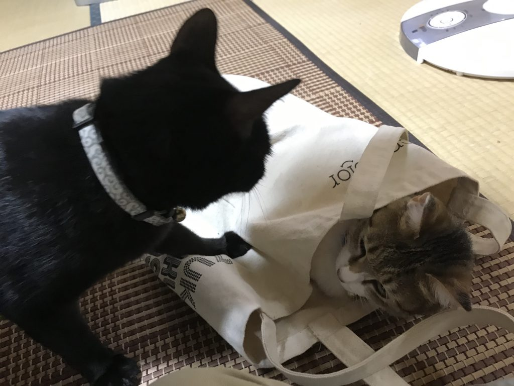 猫 多頭飼い